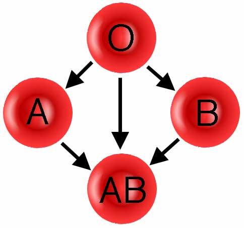 kan grubuna gore zayiflama Kan Grubuna Göre Zayıflama!